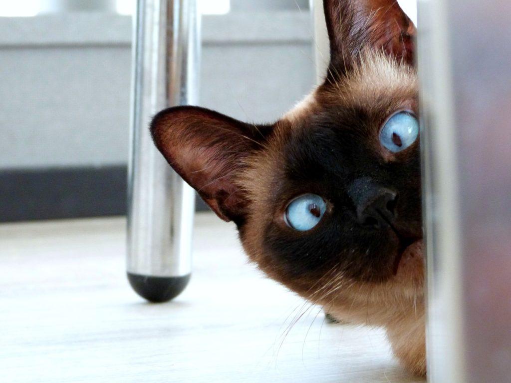 Gato con cara de sorpresa
